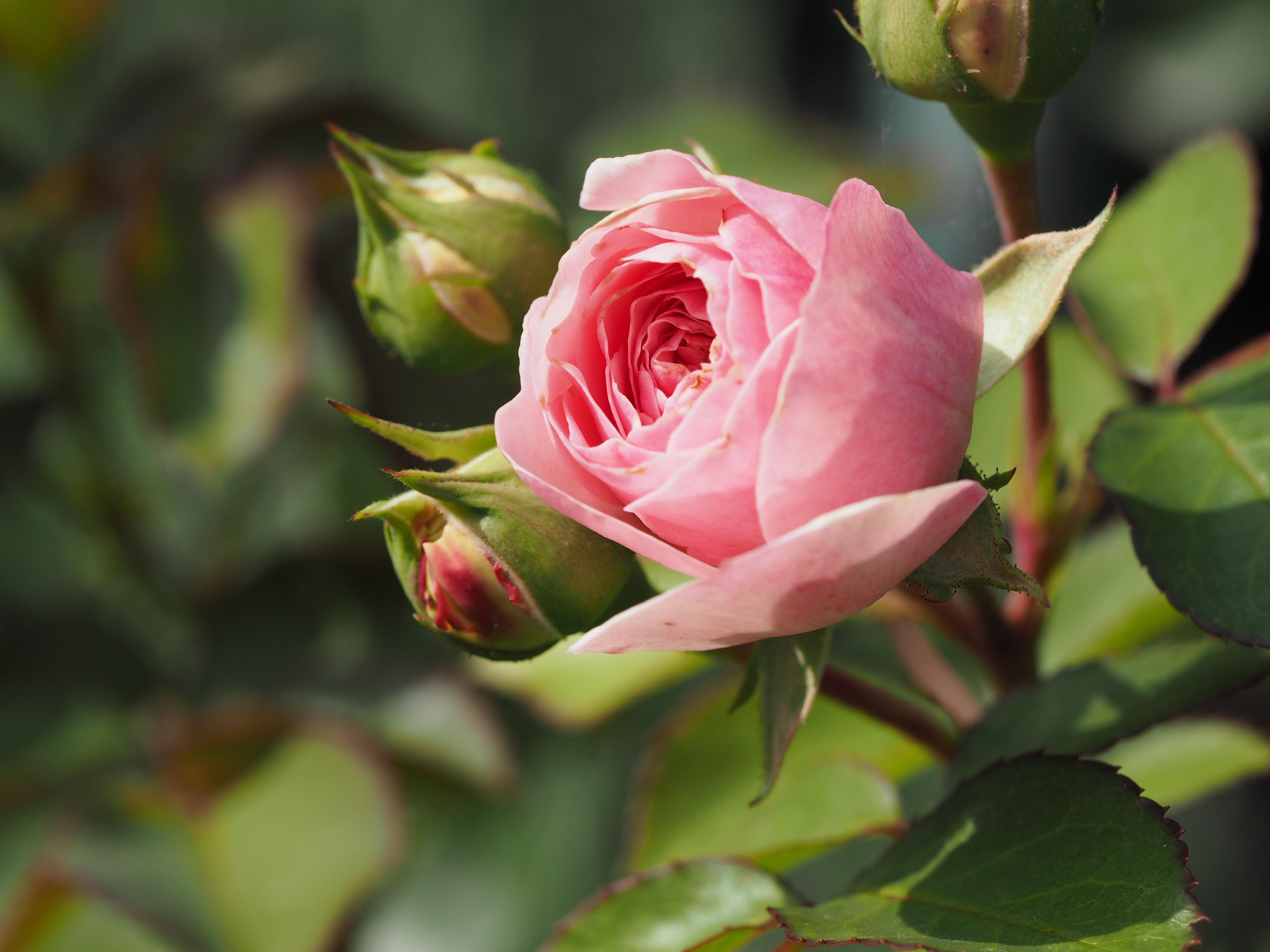 Inspiratieavond: Verdriet, keerzijde van de liefde